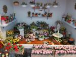 Create your own Garden in Miniature